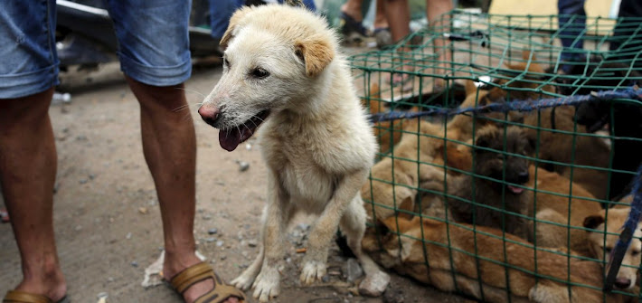 Svolta storica per l'Asia: Taiwan vieta carne di cani e gatti