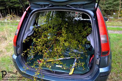 Baumtransport im Auto