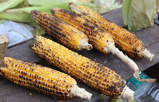 bhutta khane ke faede,health benefits of eating corn,corn in diabetes,corn for anemic patients,corn for weightloss,corn improve digestive system,bhutte ke faede
