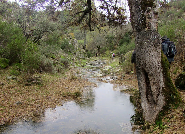 Arroyo de Gargantilla. Parque Nacional de Cabañeros
