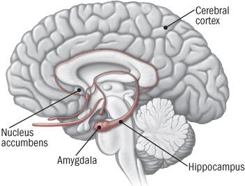 Pleasure and brain damage