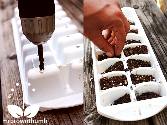 Make seed starter from ice cube tray