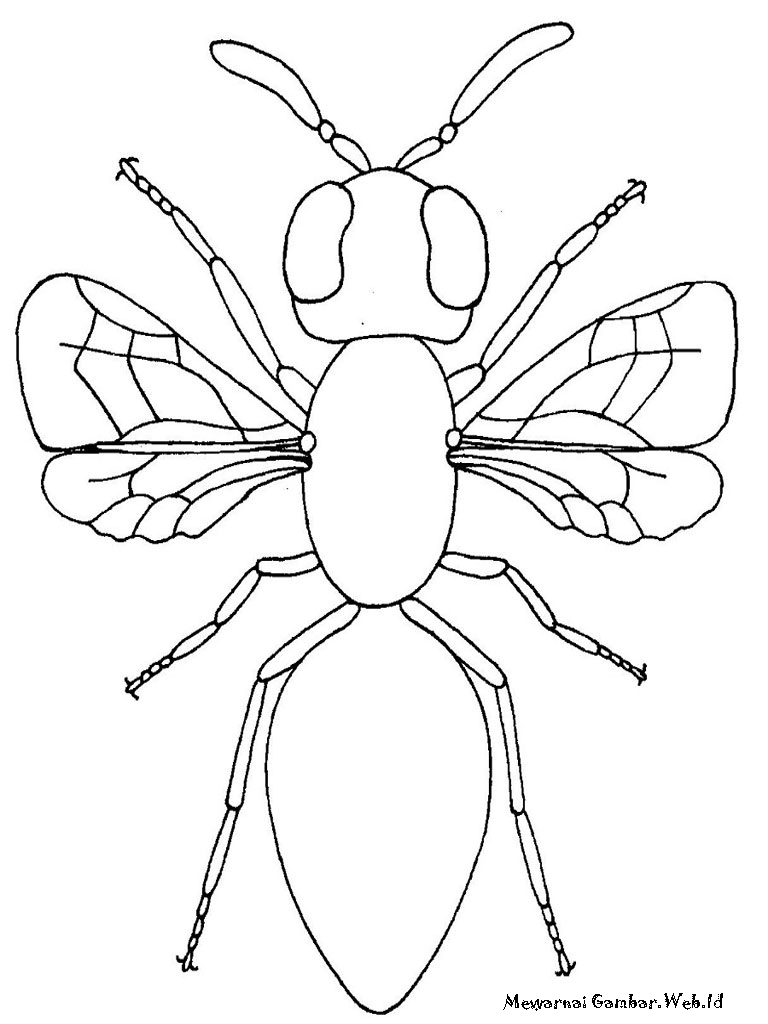 Ahmedatheism Mewarnai Gambar Sarang Lebah