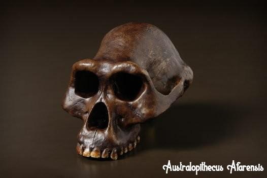 Australopithecus Afarensis, manusia purba afrika