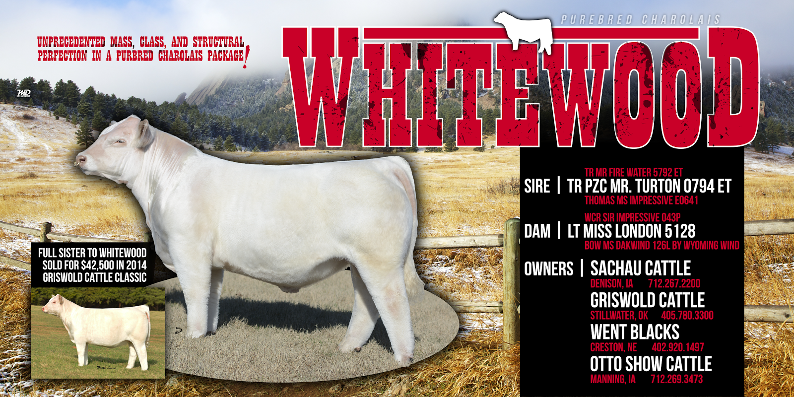 Mittag Blog Thanks To Otto Show Cattle And Brad Otto Ia For Your Denver Banner Order And Continued Business