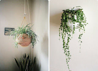 Hanging Ornamental Plants for minimalist
