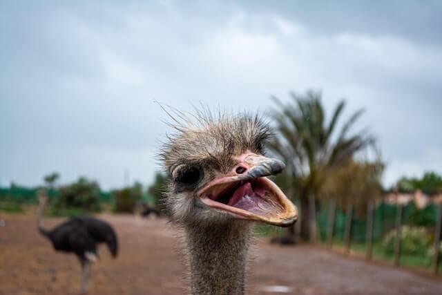 Foto de um animal rindo
