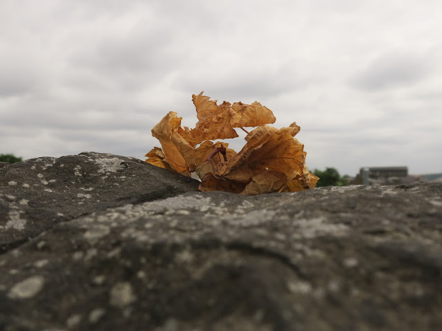 Shriveled brown leaves of plant on wall