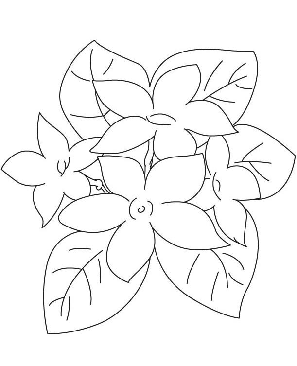 Gambar Mewarnai Bunga Melati Terbaru | gambarcoloring