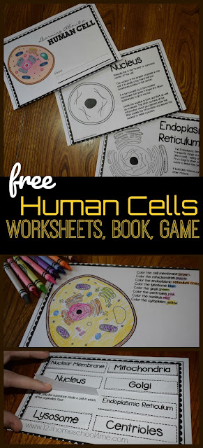 human-cell-free-printable-science-worksheets-science-game