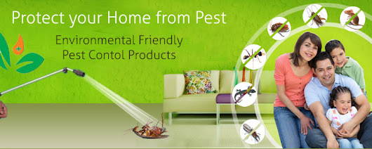 Mourier Pest Control Services Provide Solutions of Pest Control for Home in Delhi/NCR