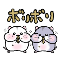 Twin hamster