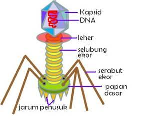 Sejarah Penemuan Virus, Ciri-Ciri Virus, Struktur Tubuh Virus dan Klasifikasi Virus