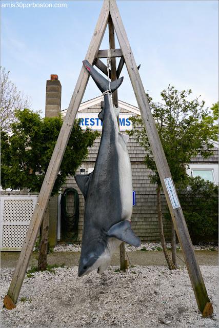 Tiburón en Provincetown, Cape Cod