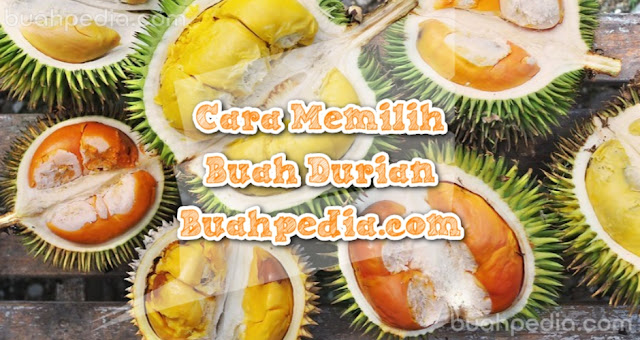 Cara Memilih Durian Matang