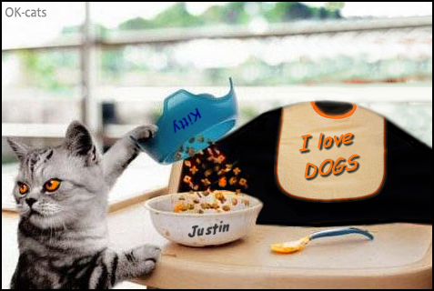 Photoshopped Cat GIF • Jerk cat hates kid because he loves døgs, haha