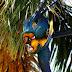 Palmeira Jerivá - Imponente e de Baixo Custo