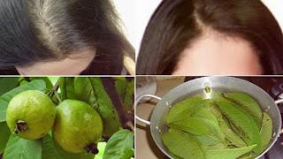 علاج تساقط الشعر باستخدام أوراق الجوافة