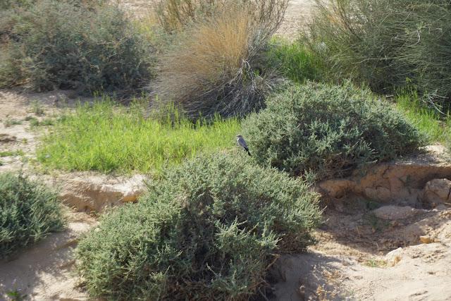 צמחים בירקעם
