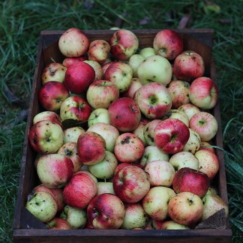 Wegańskie ciasto drożdżowe z jabłkami, żurawiną i cynamonową kruszonką