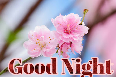 Good night flower quotes