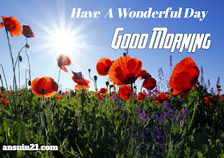 Best Good Morning HD Images, Wishes, Status HD Wallpaper for WhatsApp free download,