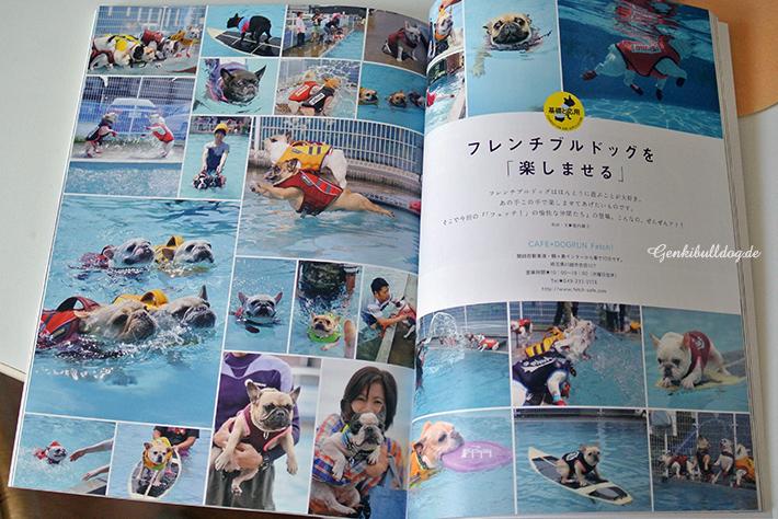 BUHI Magazin Französischebulldoggen Zeitschrift