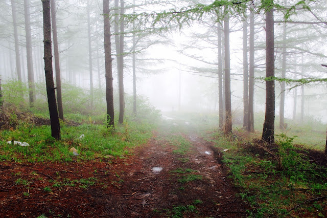 Misty Trail Photo by Nathaniel Shuman on Unsplash
