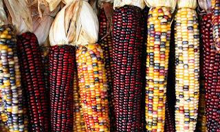 Alimento sagrado é incluído na alimentação dos alunos de Itanhaém