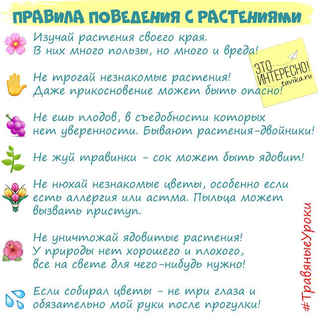 Правила поведения с растениями для детей