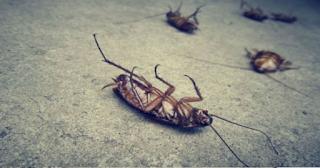Δύο τρόποι να διώξετε τις κατσαρίδες από το σπίτι