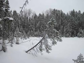 Spruce Bog Trail In Winter.