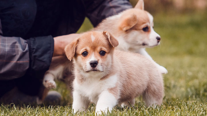 puppy obedience classes