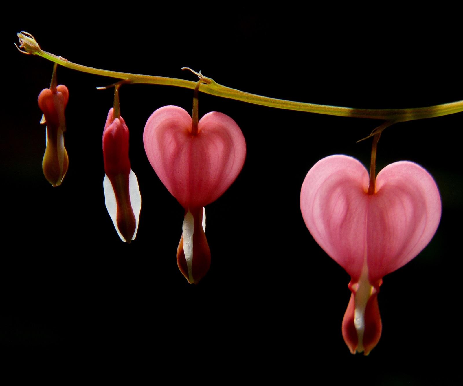 Real Monstrosities: Bleeding Heart