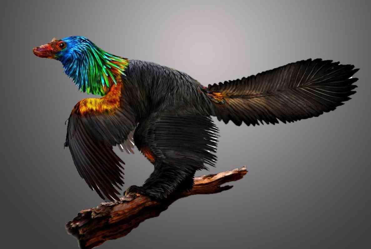 Ilustração de uma reconstrução artística em computador do dinossauro iridescente que tinha penas de arco-íris chamado Caihong juji, desenterrado na China. Crédito: Ilustração de Velizar Simeonovski, The Field Museum