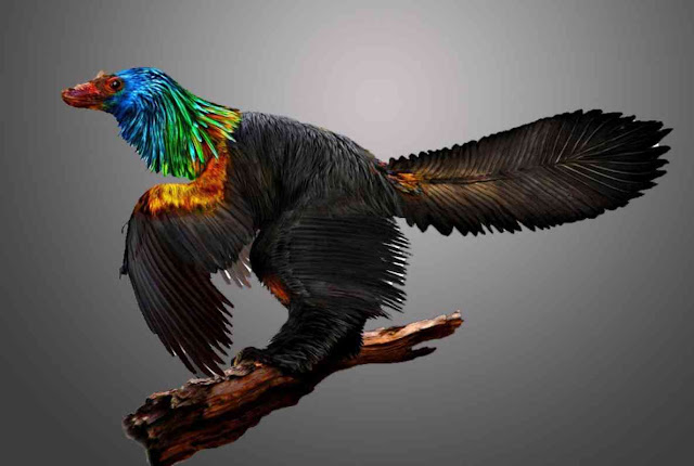 'Rainbow Dinosaur' With Iridescent Feathers