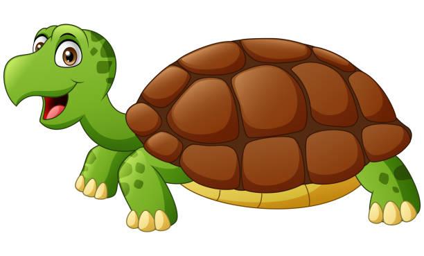 घर में कौन सा कछुआ पालन चाहिए, कछुए की प्रजातियाँ व कछुआ पालन से लाभ   Turtle Species And Benefits of Turtle Farming