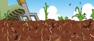 suelo fertil