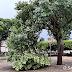 Forte chuva causa alagamentos, quedas de árvores e danos em nossa cidade
