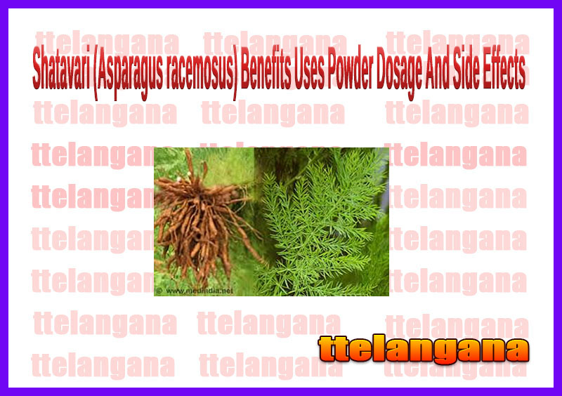 Shatavari (Asparagus racemosus) Benefits Uses Powder Dosage And Side Effects