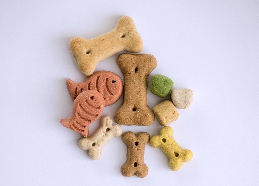 smakołyki dla psów, smakołyki dla kotów, przysmak dla kota, kocia dieta, przysmak dla psa, kocia otyłość, psia otyłość