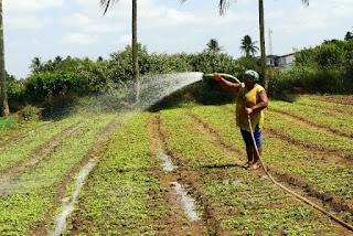 Agricultores familiares na Bahia