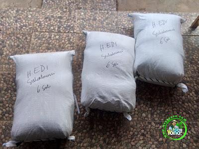 Benih padi yang dibeli    Pak H. EDI Sukabumi, Jabar.    (Sesudah di Packing).
