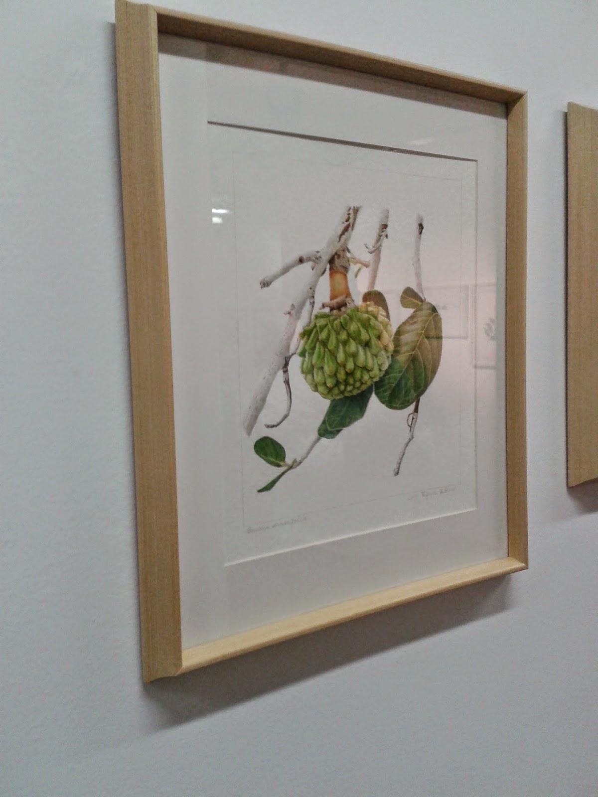 ilustração científica botânica cerrado araticum