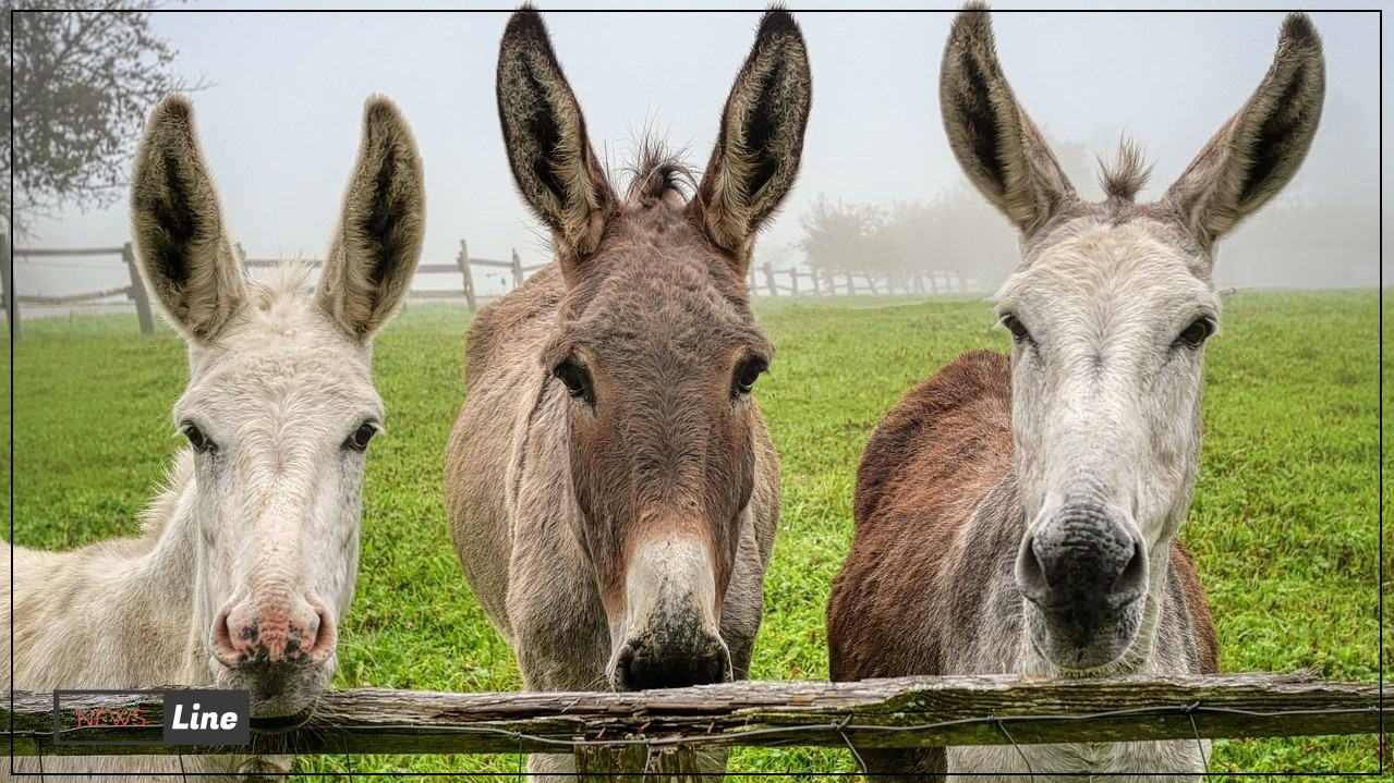 Donkeys were recruited as government employees in Turkey