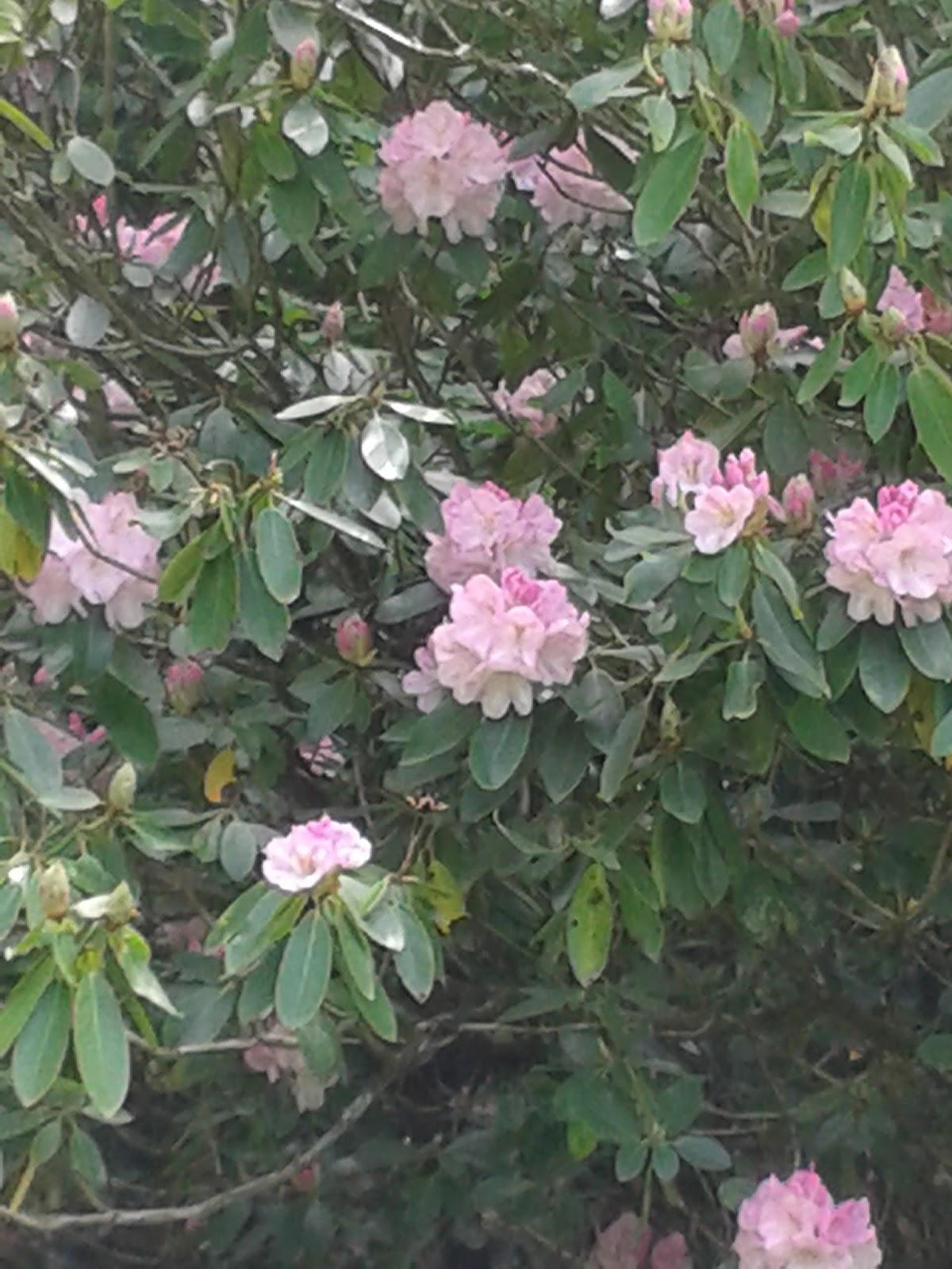 National Trust Dyffryn Gardens - May 2015