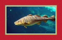 Fish Dream Meaning and Interpretations – DREAMLAND