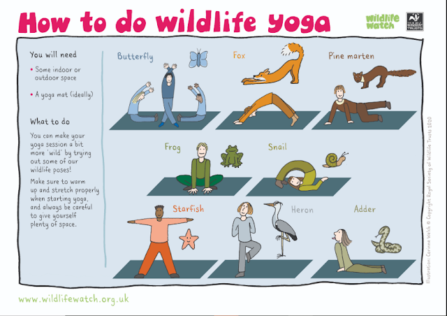 Wildlife Yoga poster