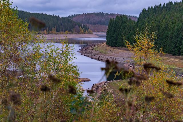 Herbstwanderung im Harz | Torfhaus – Eckerstausee – Bad Harzburg 14