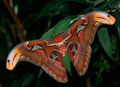 mariposa en fotografia nocturna
